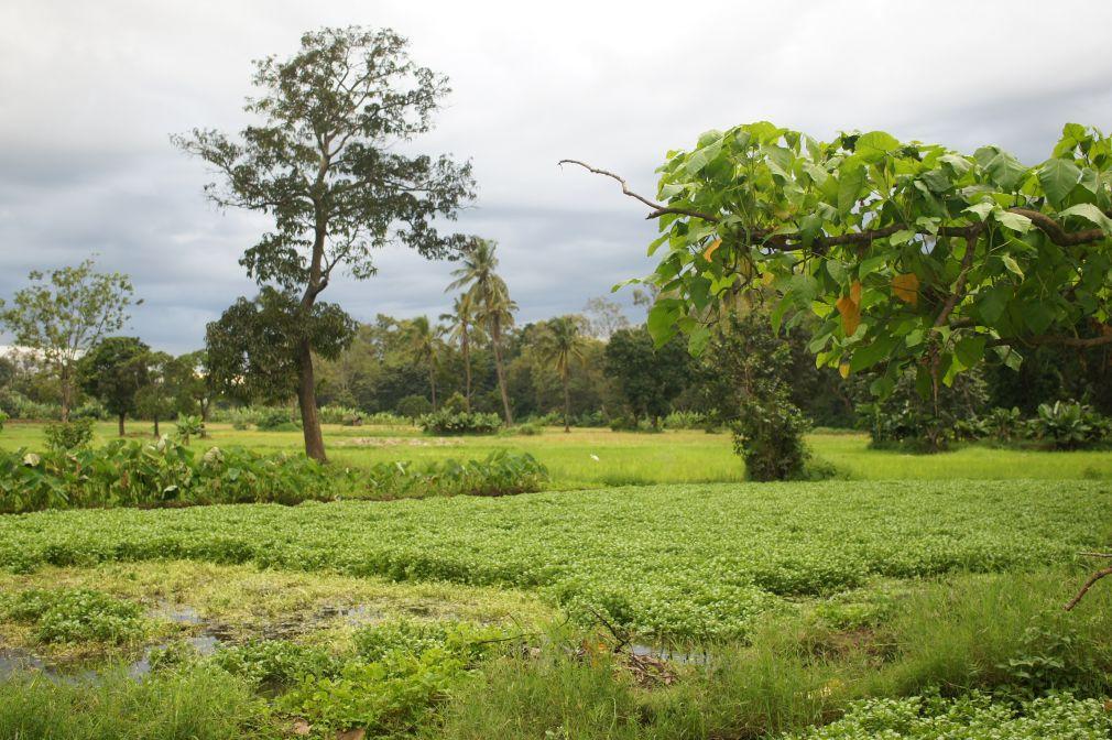 """Mai: Regen tut gut, denn das Gemüse wächst und gedeiht! Hier: """"Saladi"""" im Wasser."""